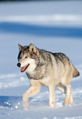 WOV 09 NE0047 01