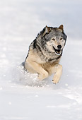 WOV 09 NE0048 01