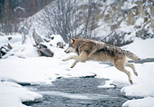 WOV 09 NE0049 01