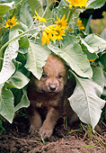 WOV 09 NE0053 01
