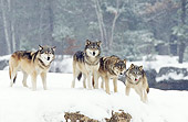 WOV 09 RF0007 01