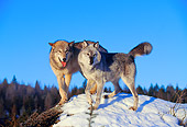 WOV 09 RK0033 19