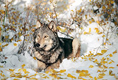WOV 09 RK0105 03