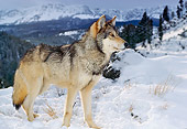 WOV 09 RK0148 18