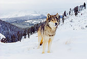 WOV 09 RK0148 23