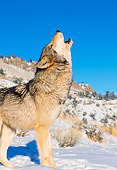WOV 09 RK0155 27