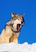 WOV 09 RK0168 02