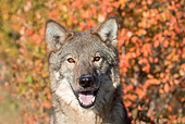 WOV 09 RW0034 01
