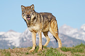 WOV 09 RW0036 01