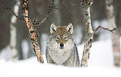 WOV 09 WF0004 01