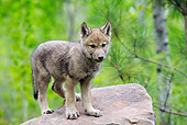 WOV 09 WF0005 01