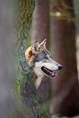 WOV 09 WF0006 01