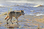 WOV 09 WF0007 01