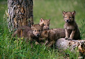 WOV 09 DB0003 01