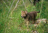 WOV 09 DB0004 01