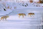 WOV 09 DB0012 01