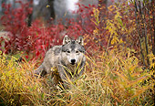 WOV 09 DB0014 01