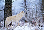 WOV 09 DB0017 01