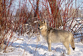 WOV 09 DB0019 01