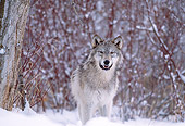 WOV 09 DB0021 01