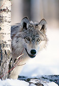 WOV 09 DB0025 01