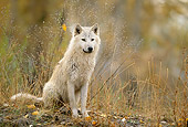 WOV 09 DB0038 01