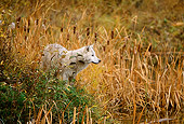 WOV 09 DB0039 01