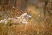 WOV 09 DB0040 01