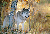 WOV 09 DB0044 01