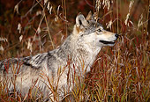 WOV 09 DB0045 01