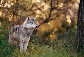 WOV 09 DB0046 01