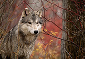 WOV 09 DB0047 01