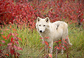 WOV 09 DB0050 01