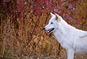 WOV 09 DB0052 01