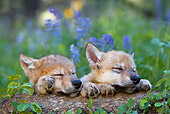 WOV 09 KH0003 01