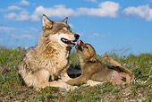 WOV 09 KH0015 01