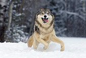 WOV 09 KH0026 01
