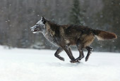 WOV 09 KH0027 01