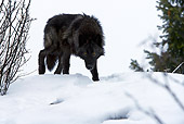 WOV 09 KH0032 01
