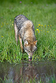 WOV 09 KH0042 01