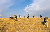 WOV 09 KH0044 01