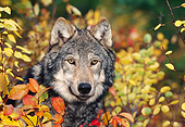 WOV 09 KH0047 01