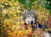 WOV 09 KH0048 01