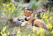WOV 09 KH0052 01