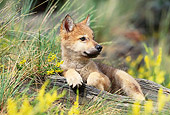 WOV 09 KH0053 01