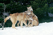 WOV 09 LS0002 01