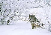 WOV 09 LS0005 01
