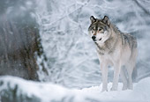 WOV 09 LS0015 01