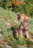 WOV 09 NE0002 01