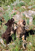 WOV 09 NE0003 01